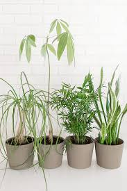 Modern Houseplants by Easy To Care For Indoor Plants