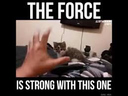 The Force Is Strong With This One Meme - the force is strong with this one youtube