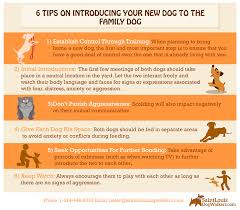 blog saint louis dog walkers