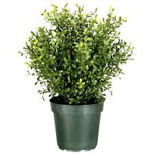 Herb Topiaries National Tree Company 24 In Argentea Artificial Plant In Round
