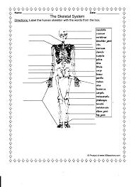 skeletal system worksheet skel human anatomy charts
