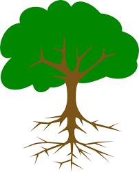 graphics for big tree graphics www graphicsbuzz