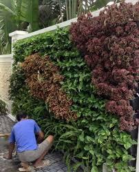 green thumbs up inc vertical gardens