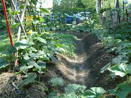 Good Garden Vegetables by Growing Your Own Vegetables Is A Good Idea At Organic Vegetable