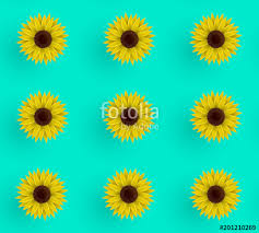 sunflower wrapping paper seamless vector pattern of sunflowers illustration on a blue