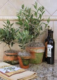 decoration avec des pots en terre cuite olivier en pot pour la terrasse ou le balcon conseils et photos