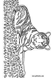 dessin à imprimer prefix a imprimer tigre blanc