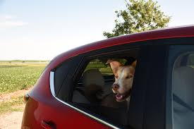 Pet Ready Exterior Doors by Homeward Bound To Chicago In Our Four Seasons 2017 Mazda Cx 5
