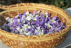 native american healing plants the virtues of violets health benefits of violets