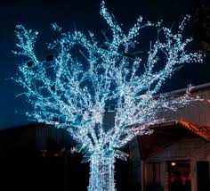 space light garland solar tree blachere illumination