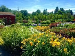 Landscape Nurseries Near Me by Lupardi U0027s Nursery U2013 Quality Gardening Center And Landscape