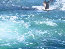 whale watching in cape cod kiku corner photography pinterest