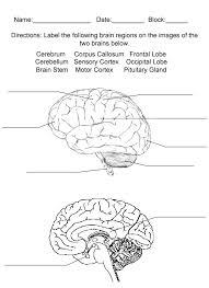 Sheep Brain Anatomy Game Brainreview Jpg