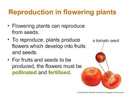 Reproduction In Flowering Plants - plant reproduction with qn
