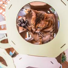 10 best cat houses beds and activity areas your cats will love