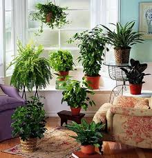 plants at home ways to give houseplants a healthy start interior office plants