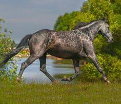 Are Horses Color Blind Peacock Appaloosa Simply Goegeous Horse Of A Different Color