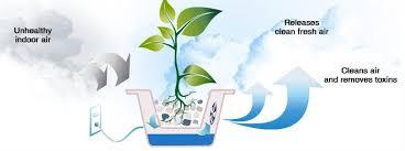 benefits of houseplants 5 health benefits of houseplants that you shouldn t ignore