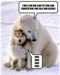 Hairless Bear Meme - polar bear and wolf