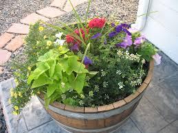 whiskey barrel planters u2014 new decoration how to plant whiskey