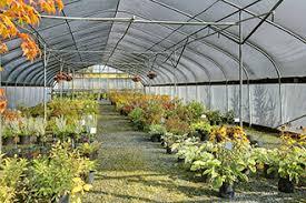 nursery plants cedar grove organic compost