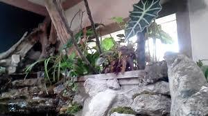 indoor monster fish pond youtube