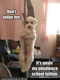 Stripper Meme - i has a hotdog stripper pole funny dog pictures dog memes