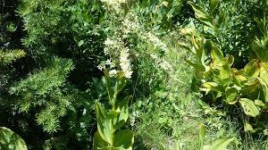 plants native to utah wild edibles in northern utah bear lake wild utah edibles blog