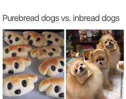Know Your Meme Dog - purebread dogs vs inbread dogs dogs know your meme