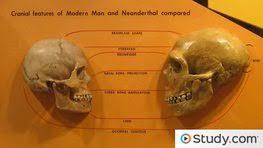 quiz u0026 worksheet evolution u0026 behavior of living primates study com