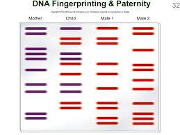 dna fingerprint worksheet the best and most comprehensive worksheets