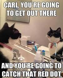 Cat Meme Funny - 50 best cat memes funny cat memes