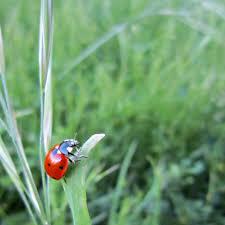 the ladybugs are back forgotten skills