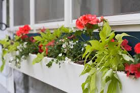 What To Plant In Window Flower Boxes - gardening basics planting window boxes u0026 container gardens