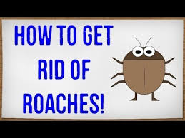 How To Get Rid Of Bugs In Kitchen Cabinets How To Get Rid Of Roaches Fast Getting Rid Of Cockroaches In