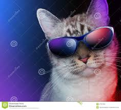 cool party cat with sunglasses stock photography image 27051942