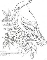 perched mourning dove coloring page from doves category select