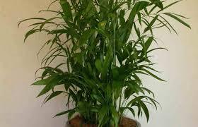 plant indoor hanging plant stunning cool indoor plants this
