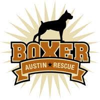 rescue a boxer dog austin boxer dog rescue rescue dogs in central texas