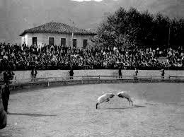 fotos antiguas eibar pelea de carneros o ahari talka pelea de carneros en la plaza de