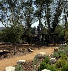 native plant landscaping low water usage landscape sherman oaks landscape designers