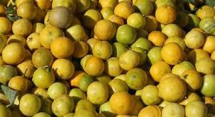 bergamote cuisine idee d amenagement de cuisine 14 bergamote plantation entretien