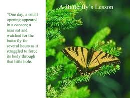 lessons from a butterfly