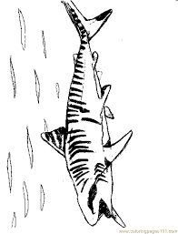 tigershark2 coloring free shark coloring pages