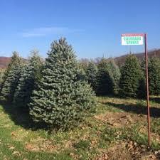 fleming u0027s christmas tree farms llc christmas trees 1803