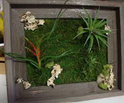 Make Wall Decorations At Home by Imposing Decoration How To Make A Living Wall Fancy Living Wall