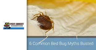 One Bed Bug Bed Bug Prevention And Control Debunking 6 Common Myths
