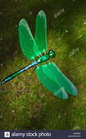 green dragonfly garden ornament stock photo royalty free image