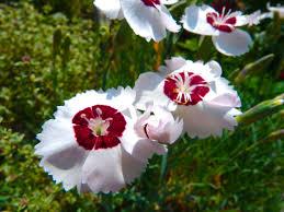 garden flowers u2013 rolling harbour gallery