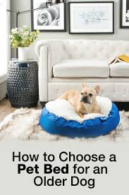 how to choose a pet bed for an older dog overstock com